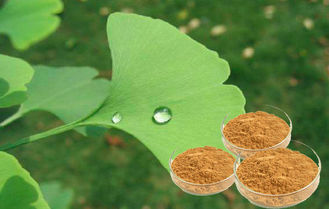 Pure Natural Botanical Ginkgo Herbal Extract Bright Yellow Brown Powder