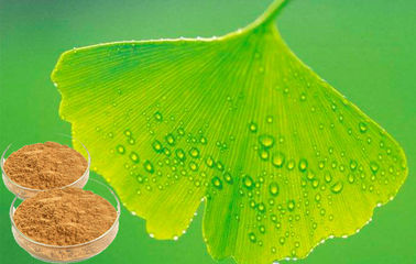CONBA Ginkgo Biloba Extract Powder For Pharmaceuticals CHP2015