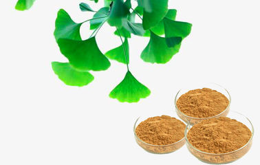 Pharmaceutical Natural Botanical Ginkgo Extracts For improving mental performance