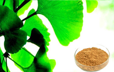 Water Soluble Ginkgo Biloba Powder For Improving Mental Performance